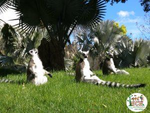 Lemures Bioparc Valencia